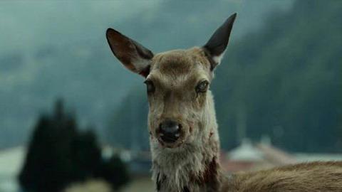 """""""殭屍鹿""""病在北美傳播 未來不排除傳播給人風險"""