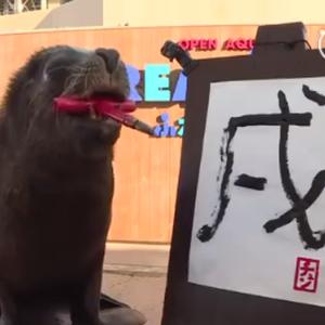 日本海狮嘴咬毛笔 写