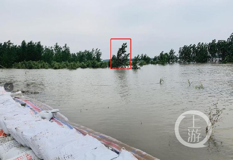 ▲7月13日,江西九江市江洲鎮,大樹被洪水淹沒到只露樹枝,大樹至少被淹沒1米。攝影/上游新聞記者 時婷婷